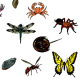 Land Invertebrates